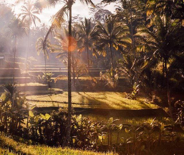 Sonbahar yayn akna msadenizle ara verip Baliye geiyorum Nereden kthellip